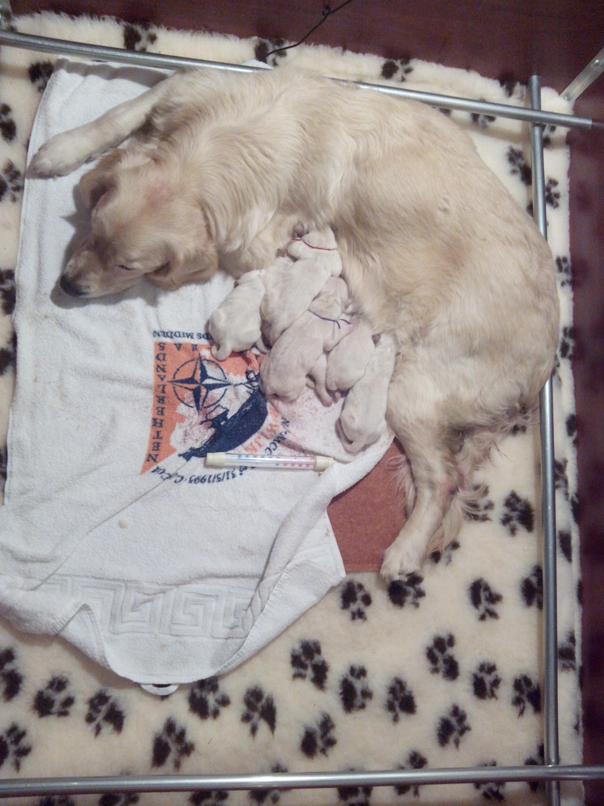 Amy en haar zeven pups weer thuis.