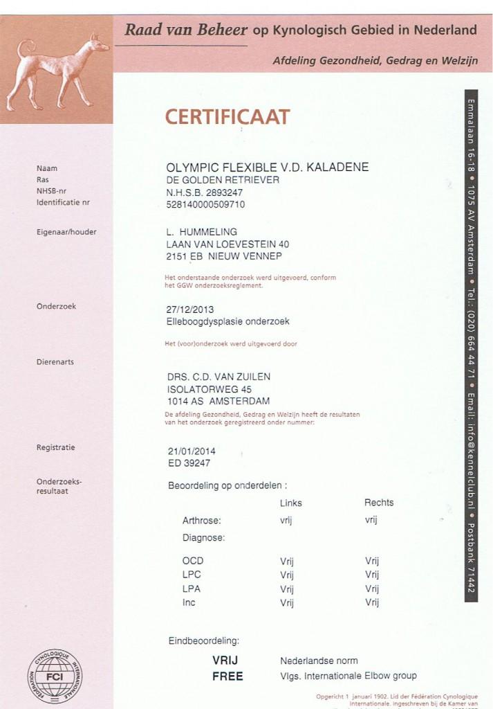 ED Certificaat Amy
