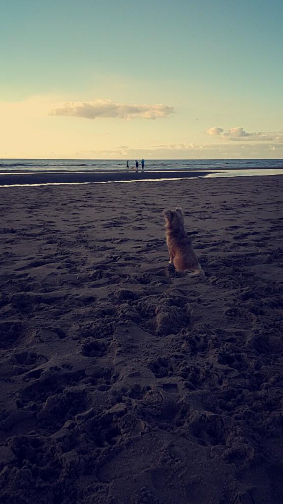 Kleine Senna op het grote strand.