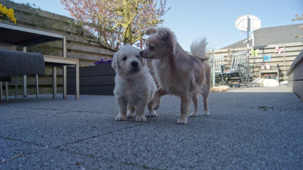 Senna en de pup spelen.