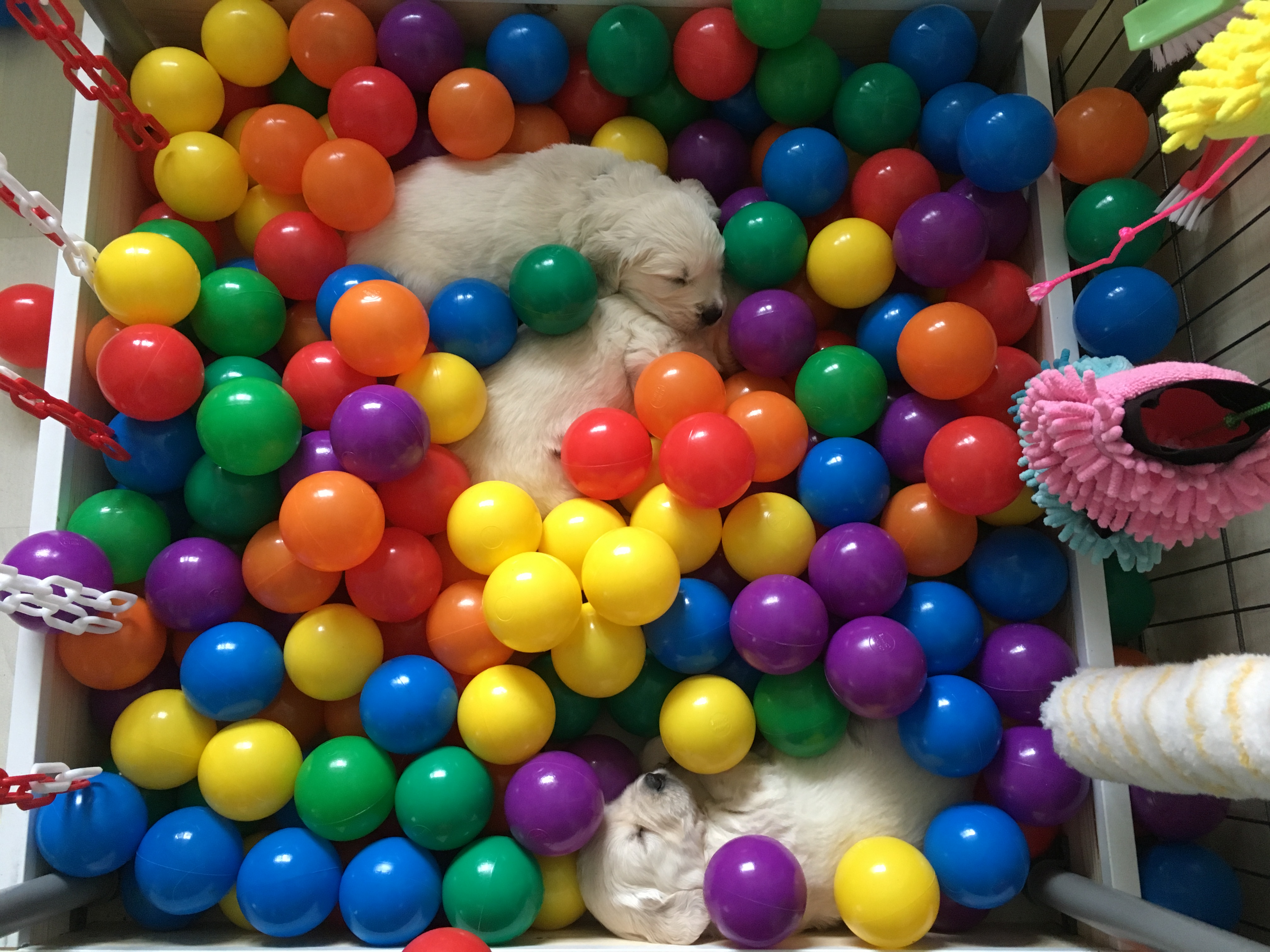 Die ballenbak slaapt kennelijk heerlijk.  Er liggen er nu al drie in te slapen.